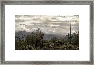 A Foggy Desert Morning  Framed Print by Saija Lehtonen