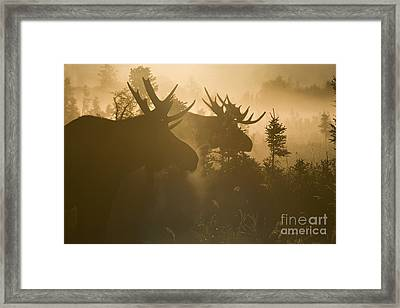A Foggy Morning Framed Print by Tim Grams