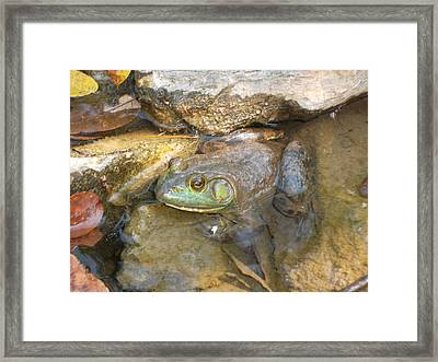 A Frog Of A Prince Framed Print by Patricia Lyons
