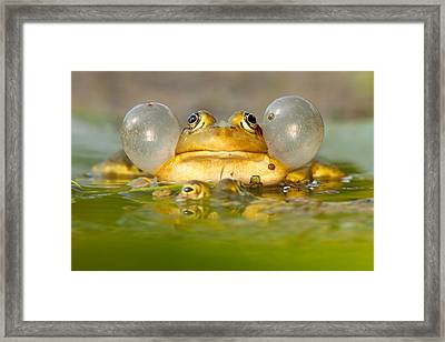 A Frog's Life Framed Print by Roeselien Raimond