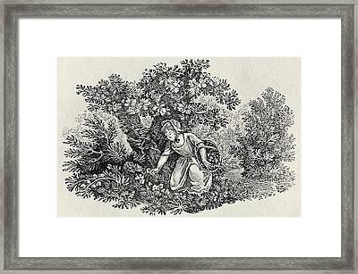A Girl Gathering Flowers Framed Print by Thomas Bewick