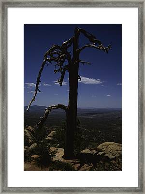 A Gnarled Tree In Arizona Framed Print by Stacy Gold