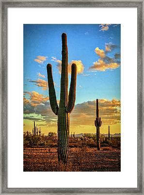 A Golden Desert Evening  Framed Print by Saija Lehtonen