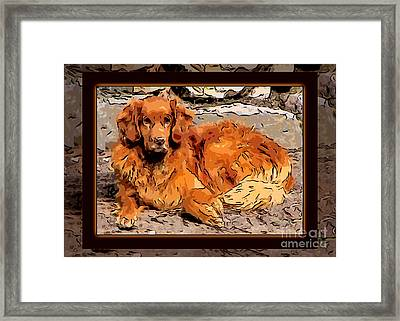 A Golden Retriever Resting Abstract Dog Art Framed Print by Omaste Witkowski