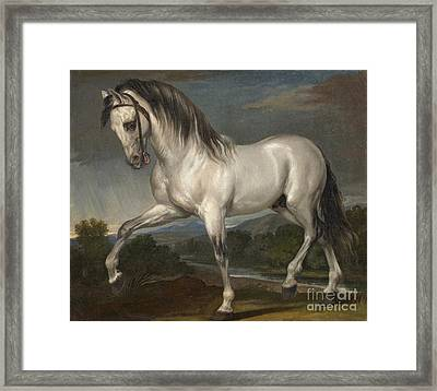 A Grey Stallion  Framed Print by Celestial Images