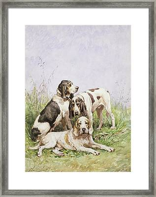 A Group Of French Hounds Framed Print by Charles Oliver de Penne