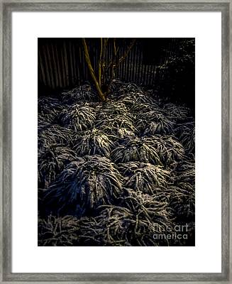A Heavy Dusting Of Snow Framed Print by James Aiken