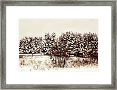 A Herd Of Trees Framed Print by William Tasker