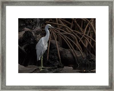 A Juvenile Heron In Perfect Pose Framed Print by Debra Larabee