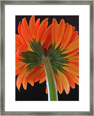 A Kiss Is Just A Kiss  Framed Print by Juergen Roth