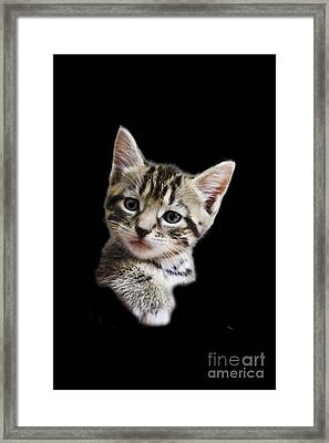 A Kittens Helping Hand On A Transparent Background Framed Print by Terri Waters
