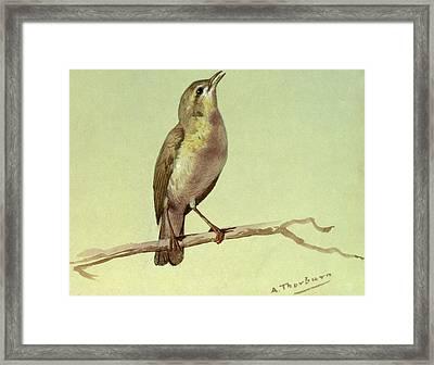 A Lark Framed Print by Archibald Thorburn