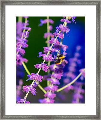 A Lavender World 2 - Paint Framed Print by Steve Harrington