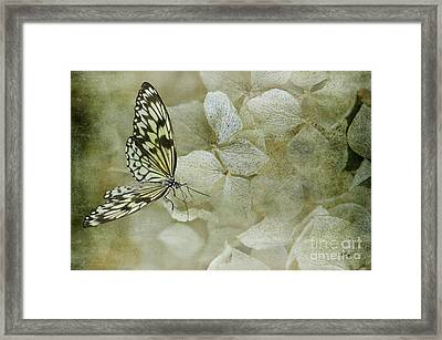 A Lighter Touch Framed Print by Lois Bryan