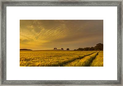 A Line In The Grass Framed Print by Chris Fletcher