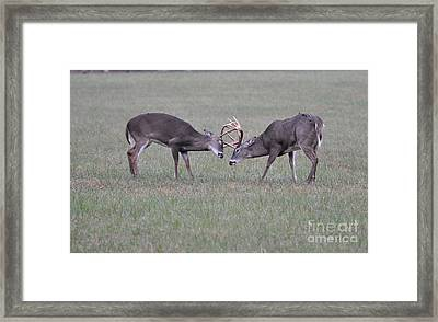 A Little Dispute Framed Print by Todd Hostetter