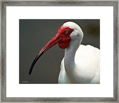 A Little Embarrassed Framed Print by Christopher Holmes