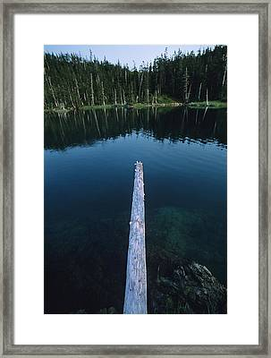 A Log Juts Out Over A Lake Framed Print by Bill Hatcher