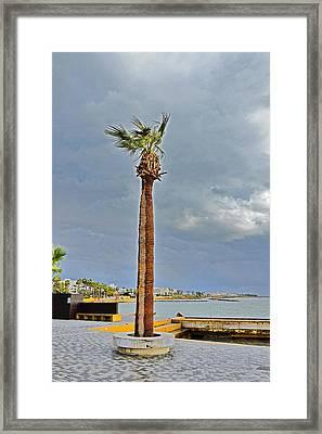 A Lone Palm Tree. Island Of Love. Framed Print by Andy Za