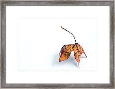 A Lonely Autumn By Kaye Menner Framed Print by Kaye Menner