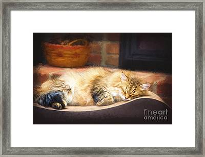 A Long Winter's Nap Framed Print by Sharon McConnell