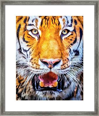 A Look Into The Tiger's Eyes Framed Print by David Millenheft