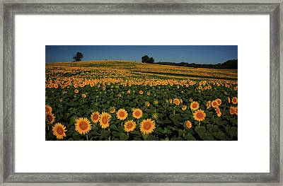 A Lot Of Birdseed  Framed Print by Chris Berry