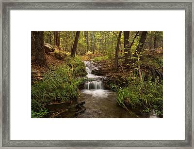 A Magical Morning In The Woods  Framed Print by Saija Lehtonen