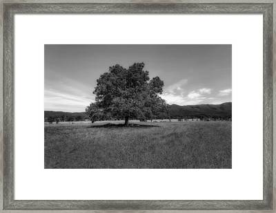 A Majestic White Oak Tree In Cades Cove - 2 Framed Print by Frank J Benz