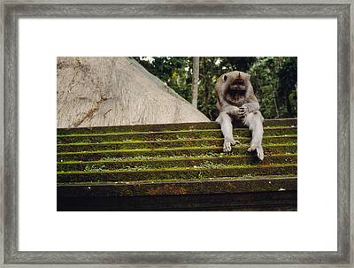 A Monkey Sits Contemplatively Framed Print by Justin Guariglia