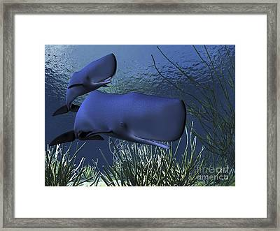 A Mother Sperm Whale Escorts Her Calf Framed Print by Corey Ford