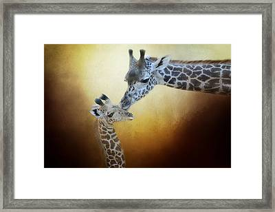 A Mother's Love Framed Print by Lynn Bauer
