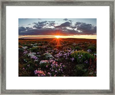 A Nuttalls Linanthastrum Morning Framed Print by Leland D Howard