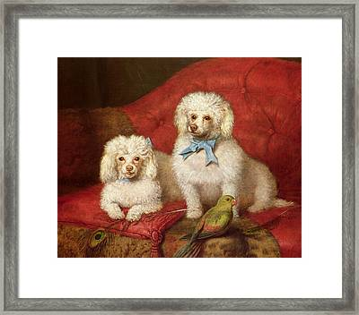 A Pair Of Poodles Framed Print by English School
