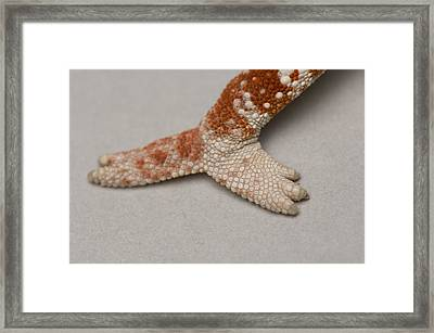 A Panther Chameleons Leg At The Lincoln Framed Print by Joel Sartore