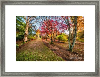 A Path Into Autumn Framed Print by Adrian Evans