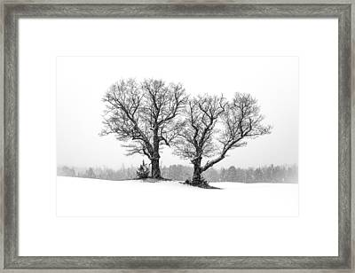 A Perfect Pair Framed Print by Shared Perspectives  Photography