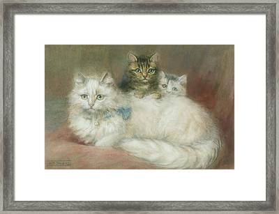 A Persian Cat And Her Kittens Framed Print by Maud D Heaps