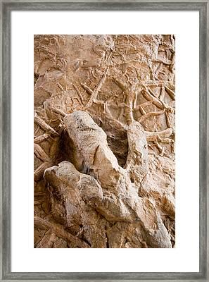 A Petrified Dinosaur Footprint Shown Framed Print by Taylor S. Kennedy
