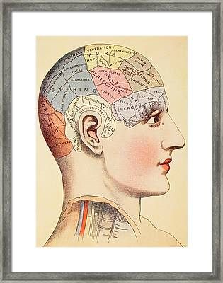 A Phrenological Map Of The Human Brain Framed Print by English School