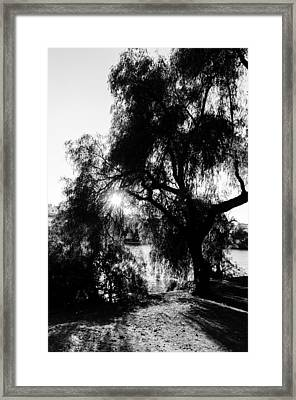A Play Of Light Bw  Framed Print by Andrea Mazzocchetti