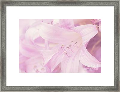 A Profusion Of Pink Framed Print by Linda Lees