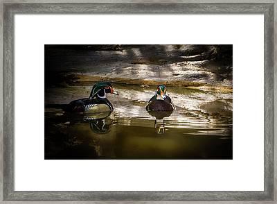 A Quiet Retreat - Wood Ducks Framed Print by TL Mair