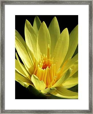 A Ray Of Sunshine Framed Print by Bruce Bley