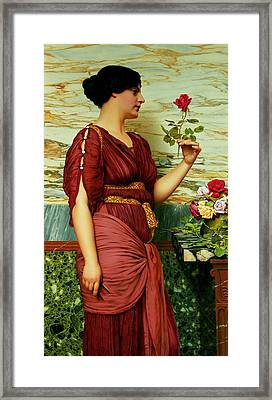 A Red Rose   Framed Print by John William Godward