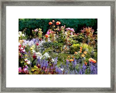 A Riot Of Roses Framed Print by Elaine Plesser