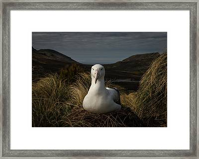 A Royal In Waiting Framed Print by Doug Gimesy