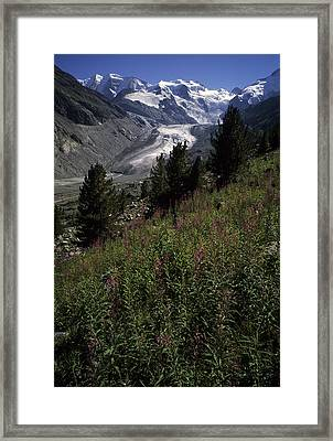 A Scenic View Of The Morteratsch Framed Print by Taylor S. Kennedy