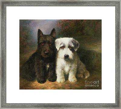 A Scottish And A Sealyham Terrier Framed Print by Lilian Cheviot