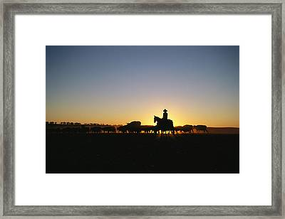 A Silhouetted Australian Cattle Rancher Framed Print by Medford Taylor